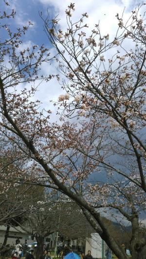 妙法寺公園の桜まつり
